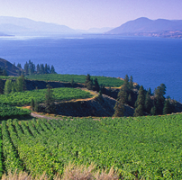 Mission Hill Winery British Columbia Canada Public Wineries